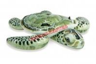 Żółw wodny